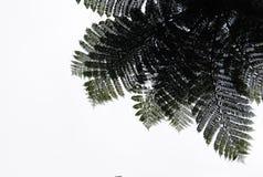 Árbol del helecho Fotografía de archivo libre de regalías