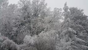 Árbol del hielo Fotos de archivo