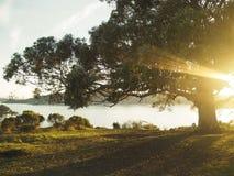 Árbol del hippie Foto de archivo