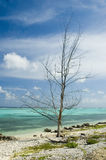 Árbol del huracán Fotografía de archivo libre de regalías