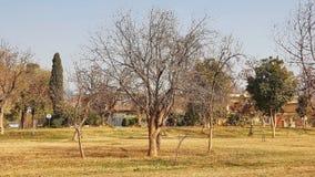 Árbol del invierno fotos de archivo