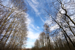 Árbol del invierno Fotos de archivo libres de regalías