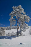 Árbol del invierno Foto de archivo