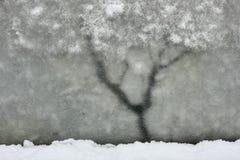 Árbol del invierno Imagenes de archivo
