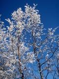 Árbol del invierno Fotografía de archivo