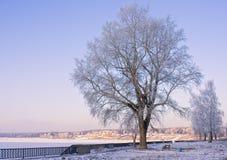 Árbol del invierno Imagen de archivo libre de regalías