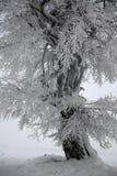 Árbol del invierno Foto de archivo libre de regalías