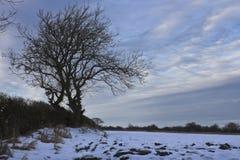 Árbol del invierno al lado del campo nevado, Holywell, Northumberland fotos de archivo