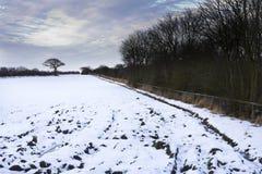 Árbol del invierno al lado del campo nevado, Holywell, Northumberland fotografía de archivo