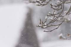 Árbol del invierno, caída de la nieve, en Toyama, Japón Fotografía de archivo libre de regalías