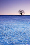 Árbol del invierno con el árbol Fotografía de archivo