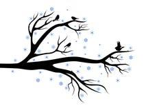Árbol del invierno con los pájaros Fotografía de archivo
