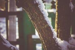 Árbol del invierno con macro de la nieve Imágenes de archivo libres de regalías