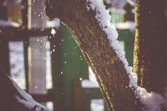 Árbol del invierno con macro de la nieve Imagen de archivo libre de regalías