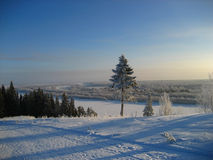 Árbol del invierno en azul Imagenes de archivo