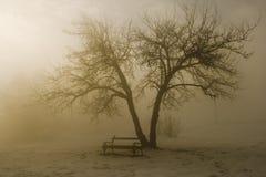 Árbol del invierno en niebla imagenes de archivo