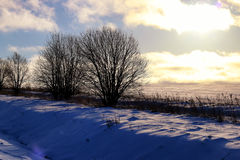 Árbol del invierno en un campo Imagen de archivo libre de regalías