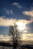 Árbol del invierno en un campo Foto de archivo