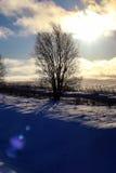 Árbol del invierno en un campo Imagenes de archivo