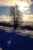 Árbol del invierno en un campo Imagen de archivo