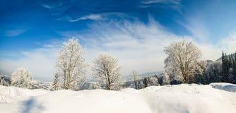 Árbol del invierno en un campo con el cielo azul Foto de archivo