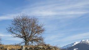 Árbol del invierno en un cielo azul hermoso con las nubes Fotos de archivo libres de regalías