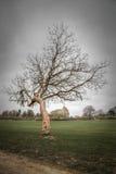 Árbol del invierno en un parque Fotografía de archivo