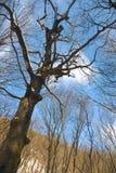 Árbol del invierno Nevado foto de archivo
