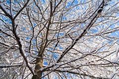 Árbol del invierno Nevado imagen de archivo libre de regalías