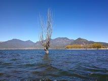 Árbol del invierno que se coloca en el lago imagen de archivo