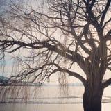 Árbol del invierno Ramas y fondo deshojados del lago Fotografía de archivo
