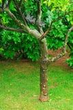 Árbol del jardín Fotos de archivo