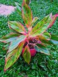 Árbol del jardín Foto de archivo libre de regalías