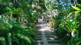 Árbol del jardín Fotografía de archivo libre de regalías