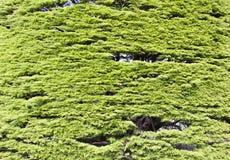 Árbol del jardín botánico Imagen de archivo libre de regalías