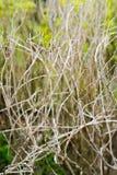 Árbol del jardín, rama seca Imagenes de archivo