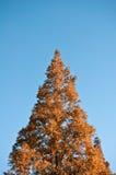 árbol del X-mástil fotos de archivo