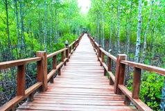 Árbol del mangle Imagen de archivo