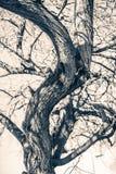 Árbol del misterio imagen de archivo