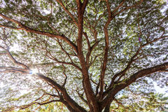 Árbol del modelo Foto de archivo