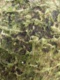 Árbol del musgo en el tarro Fotografía de archivo libre de regalías
