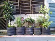 Árbol del neumático Fotografía de archivo libre de regalías