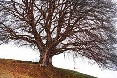 Árbol del oscilación Foto de archivo