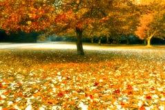 Árbol del otoño fotos de archivo