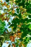 Árbol del otoño. Fotografía de archivo