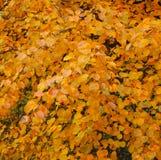 Árbol del otoño Fotos de archivo libres de regalías