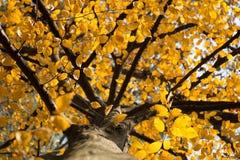 Árbol del otoño Foto de archivo libre de regalías