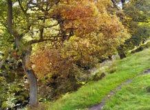 árbol del otoño al borde del arbolado escarpado con colores de la caída Imagenes de archivo