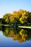 Árbol del otoño cerca del lago Imagen de archivo libre de regalías