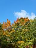 Árbol del otoño con follaje brillante Fotos de archivo